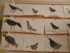 """Тема недели была """"Встречаем птиц"""" (17 - 21.04.17г.)."""